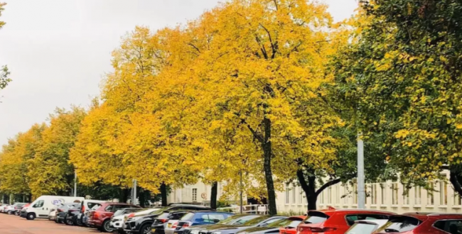 致卡迪夫秋天的一封信:落叶堆积着秋意,秋意深藏着思念……