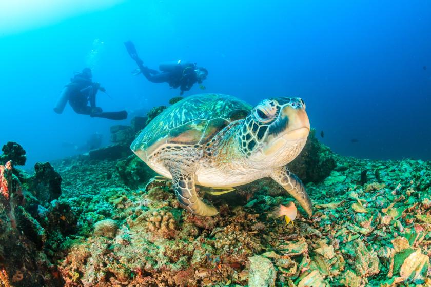 study in australia: sealife
