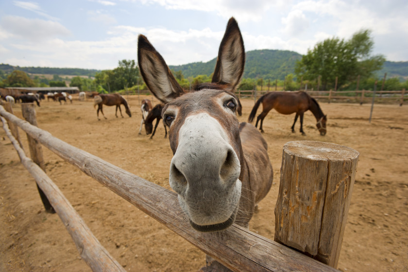 Idioms in different languages_donkey