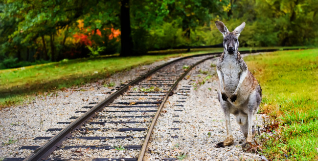 Ultimate Student Guide To Transport In Australia