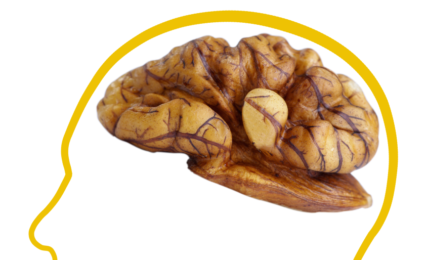 Exam tips food nuts brain